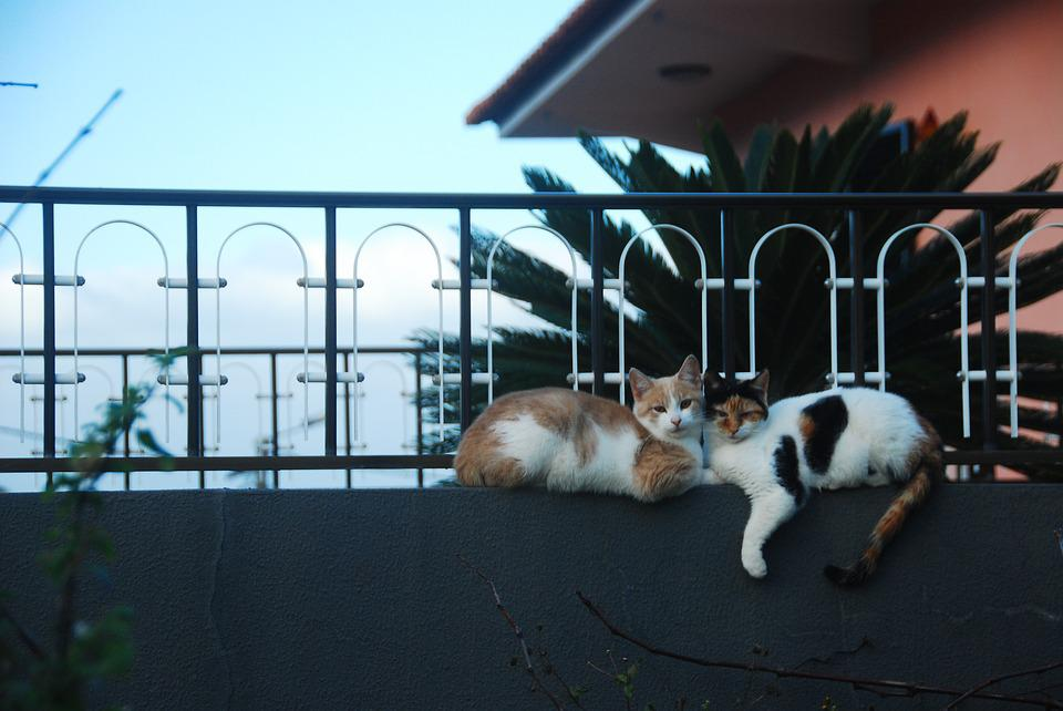 Cats, Love, Fence, Happiness, Peace Of Mind, Cuddling