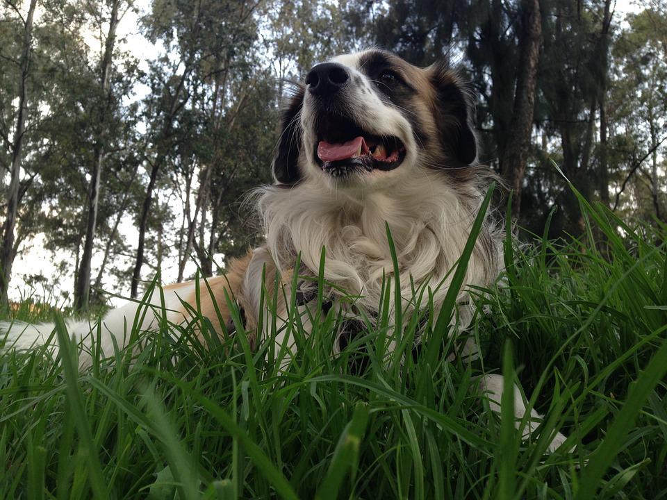 Dog, Grass, Pet, Happy, Play, Animal, Hairy