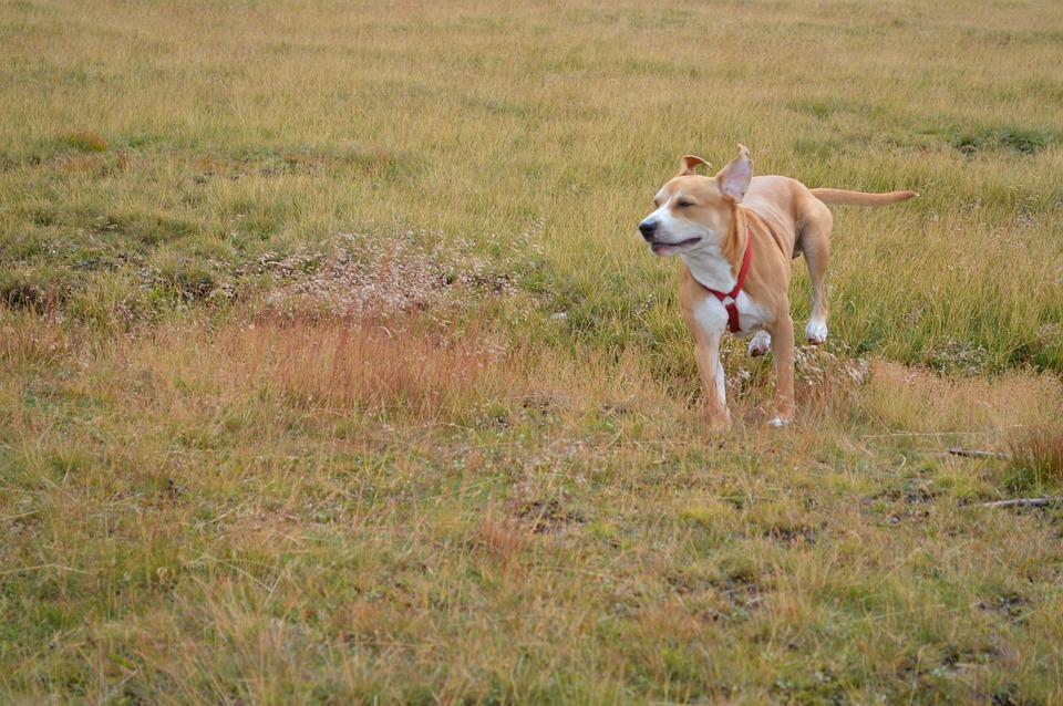 Dog, Joy, Play, Playful, Happy, Happiness, Animal, Pet