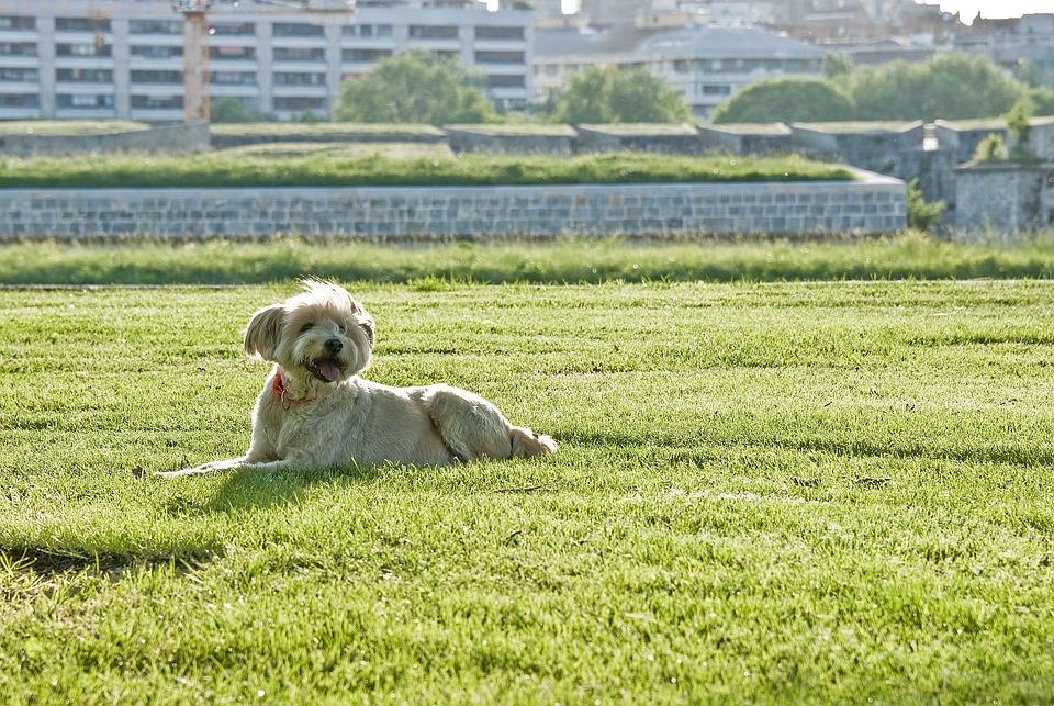 Pet, Dog, Happy, Funny, Friend, Grass