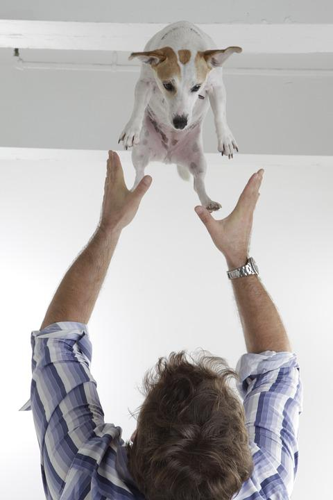 Man, Dog, Happy, Toss, Pet, Jack Russel, Funny
