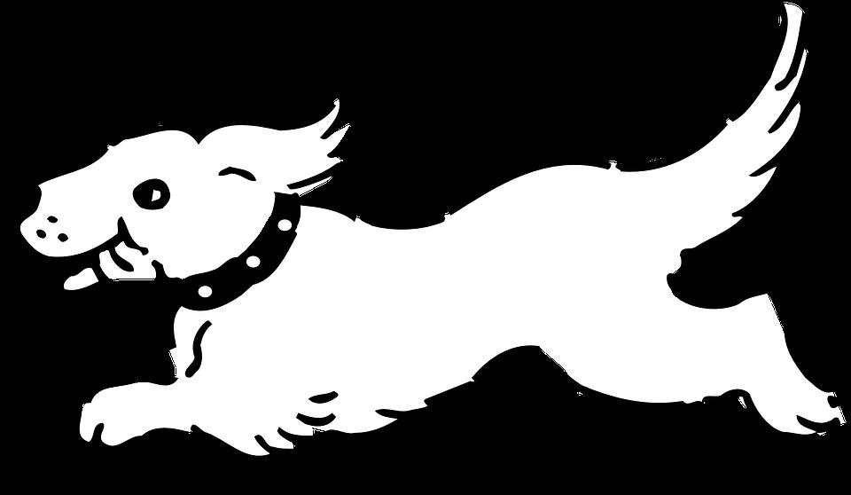 Dog, Running, Happy, Tongue, Fast, Small