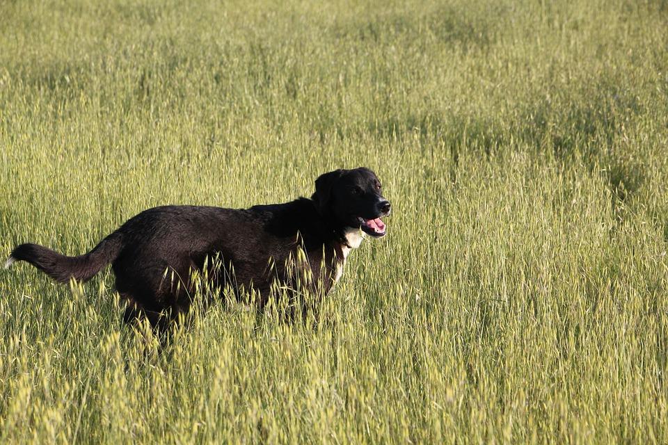 Animals, Dog, Pet, Black, Happy, Nature, Small