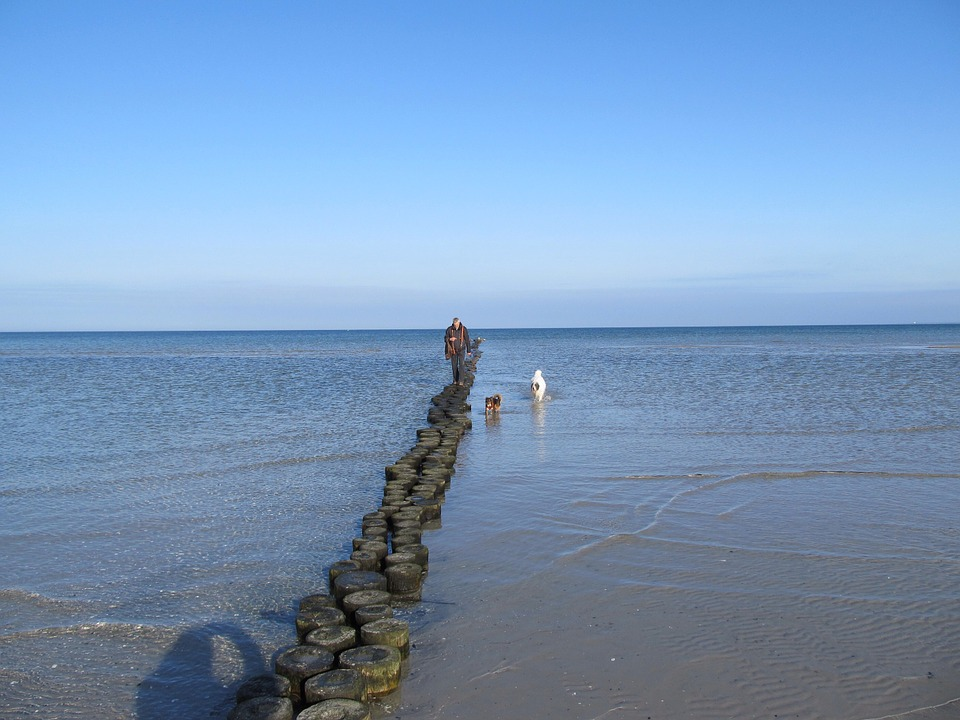 Baltic Sea, Sea, Wide, Happy, Swim, Dogs, Groynes