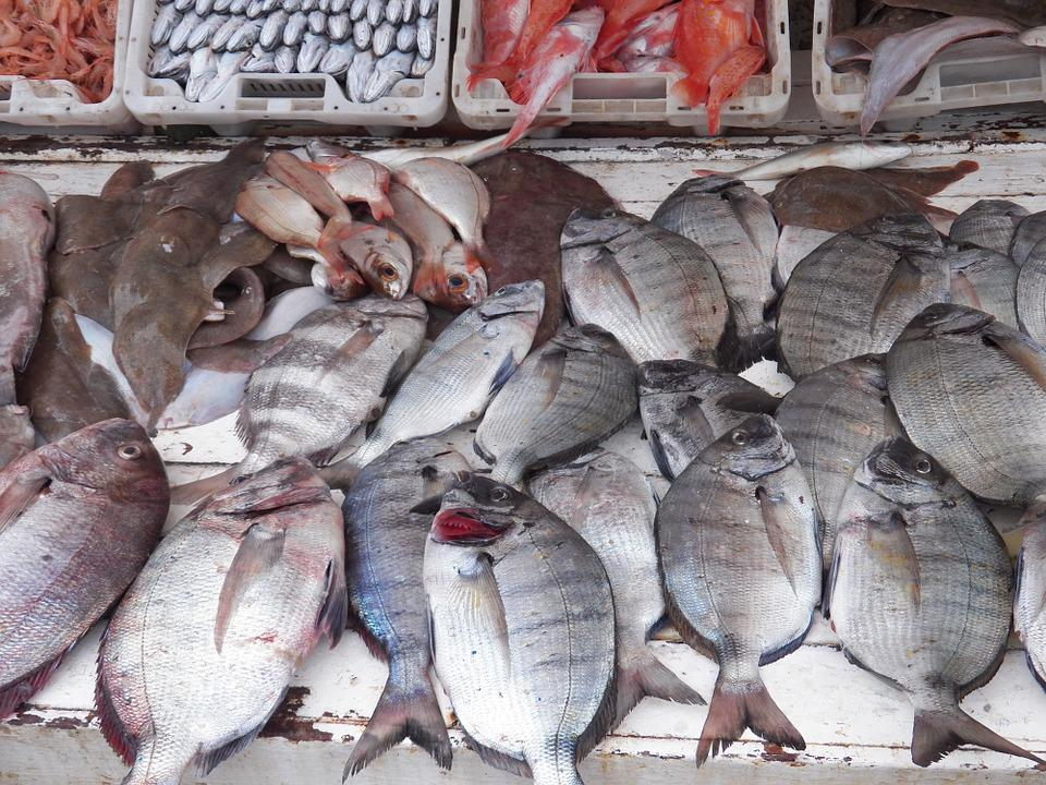 Fish, Fishes, Harbor, Fishing Harbor, Food