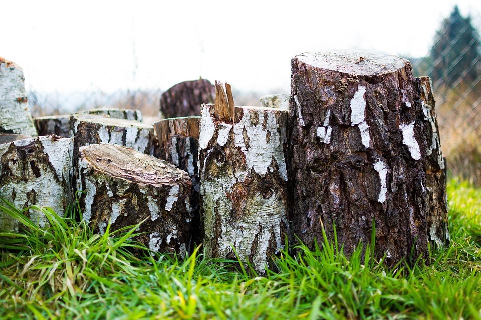 Wood, Lumber, Timber, Hardwood, Birch, Bark, Chopped