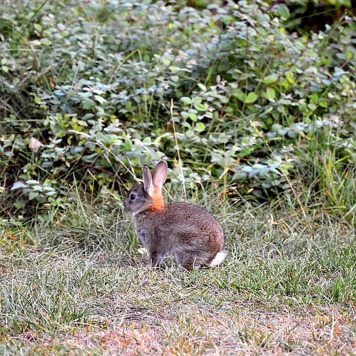 Hare, Ears, Mammal, Nature, Long Eared, Wild Hare, Head