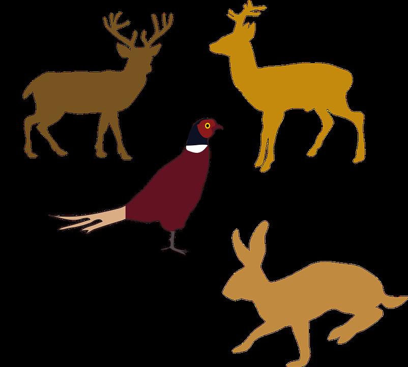 Animals, Wildlife, Bird, Boar, Pheasant, Deer, Hare