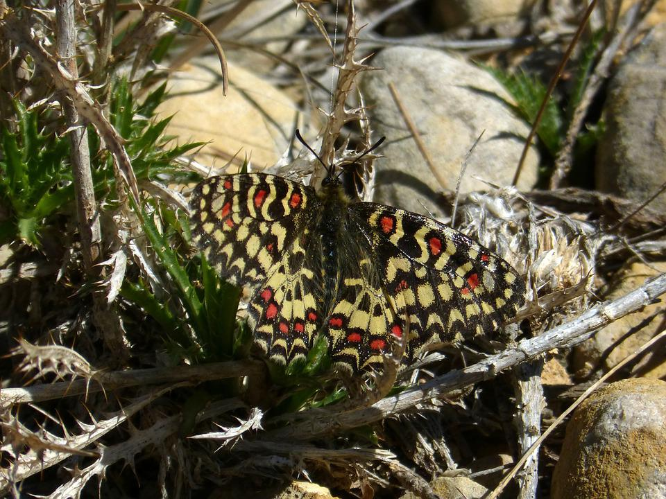 Butterfly, Branch, Colorful, Harlequin