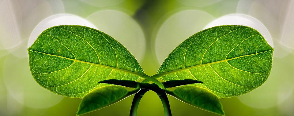 Harmony, Banner, Symbol, Leaf, Symmetry, Nature, Line