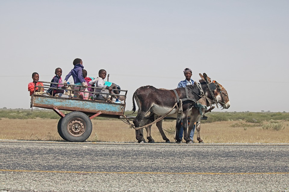 Donkey Cart, Cart, Donkey, Car, Harness, Vehicle