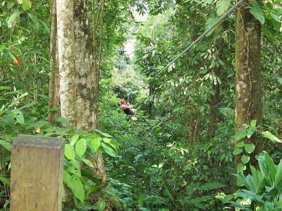 Zipline, Forest, Canopy, Extreme, Harness, Rainforest