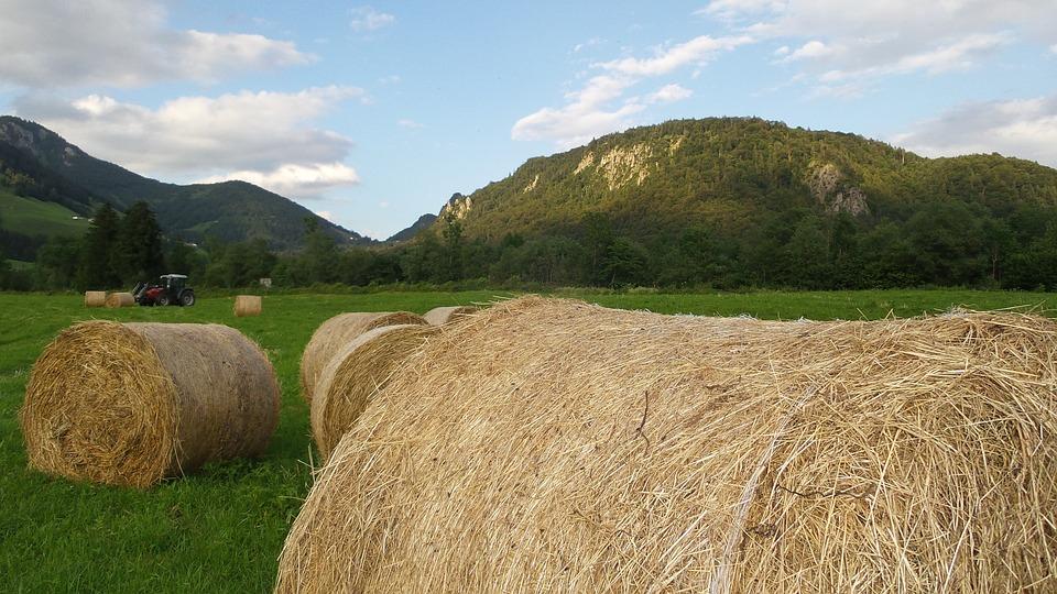 Hay, Harvest, Agriculture, Hay Bales, Rural