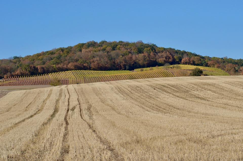 Autumn, Arable, Field, Agriculture, Landscape, Harvest