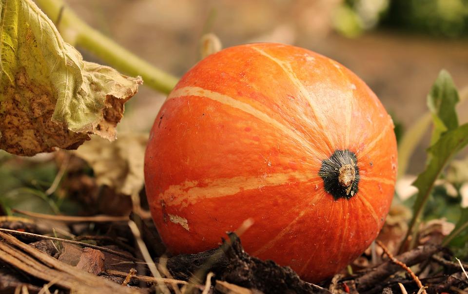 Pumpkin, Kabocha, Squash, Autumn, Orange, Harvest