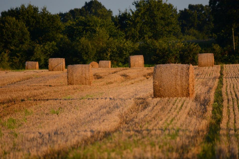 Landscape, Cereals, Wheat, Harvest, Straw, Bale