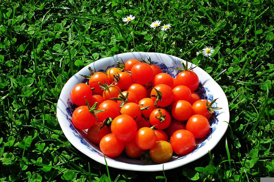 Tomatoes, Organic, Harvest, Healthy, Bowl