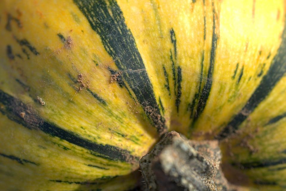 Pumpkin, Vegetables, Autumn, Harvest, Decoration