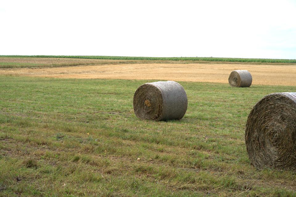 Straw Bales, Straw, Harvest, Agriculture, Field