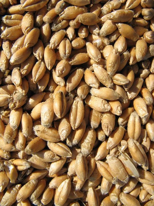 Cereals, Harvest, Grain, Farm, Nature