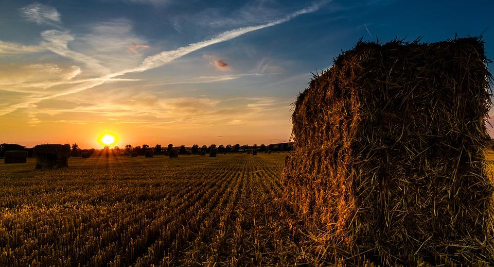 Sunset, Straw Harvest, Summer, Harvest, Harvest Time