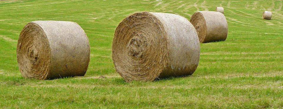 Straw Bales, Harvest, Field, Hay, Agriculture, Meadow