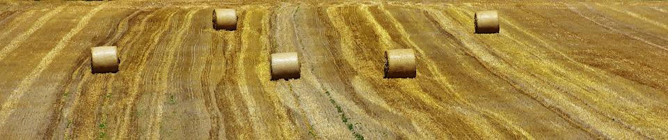Hay Bales, Hay, Straw Bales, Straw, Harvest