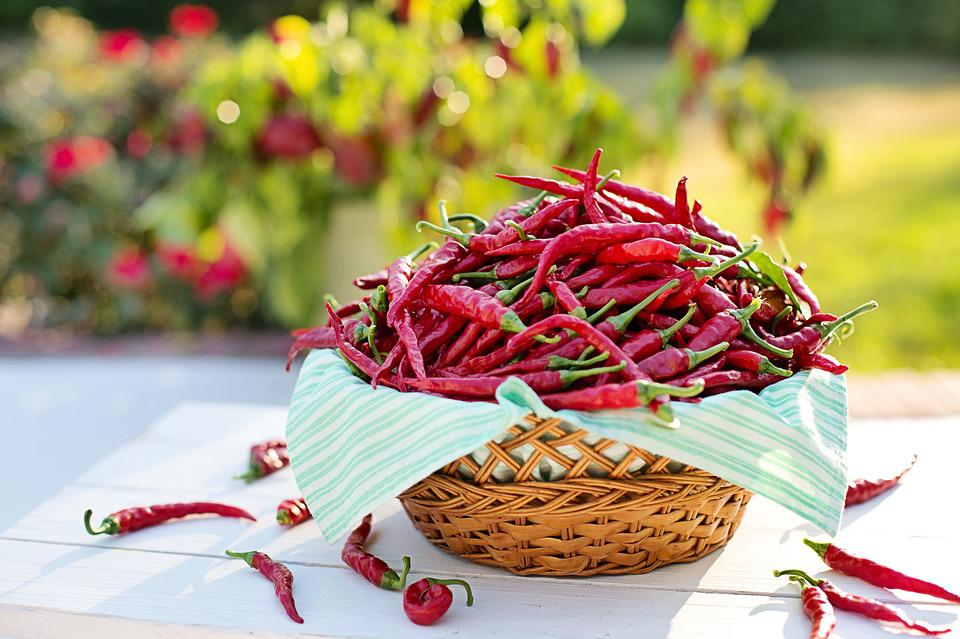 Cayenne Peppers, Red Peppers, Hot Peppers, Harvest