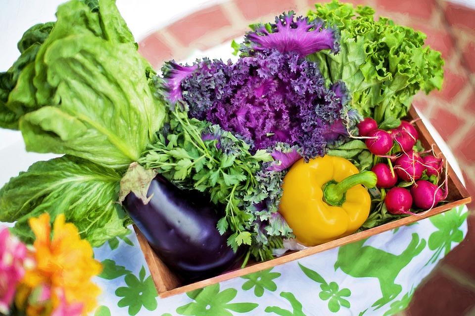 Vegetables, Garden, Harvest, Organic, Green, Gardening