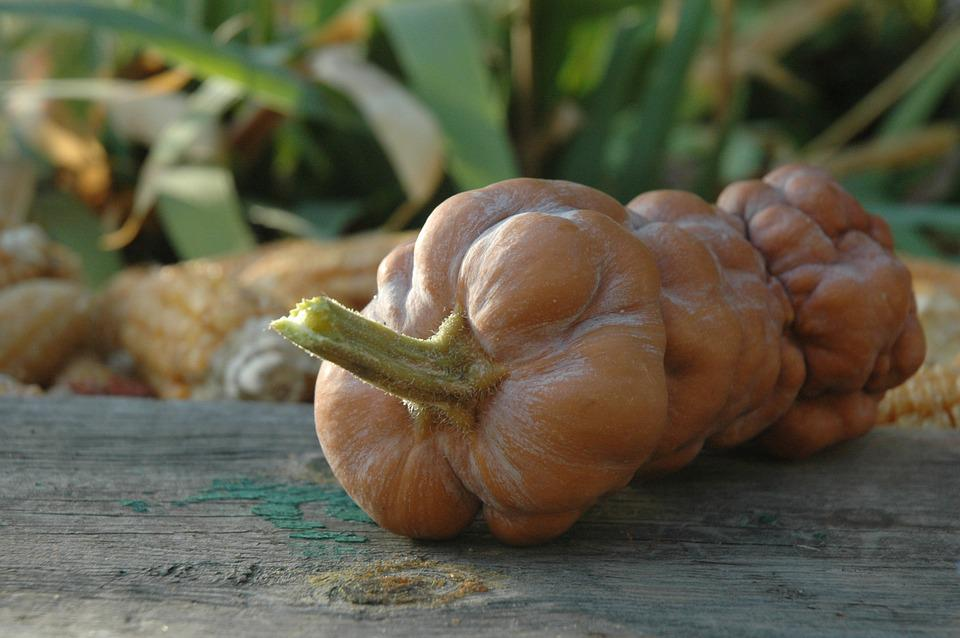 Pumpkin, Autumn, Harvest, Vegetables, Vegetarianism
