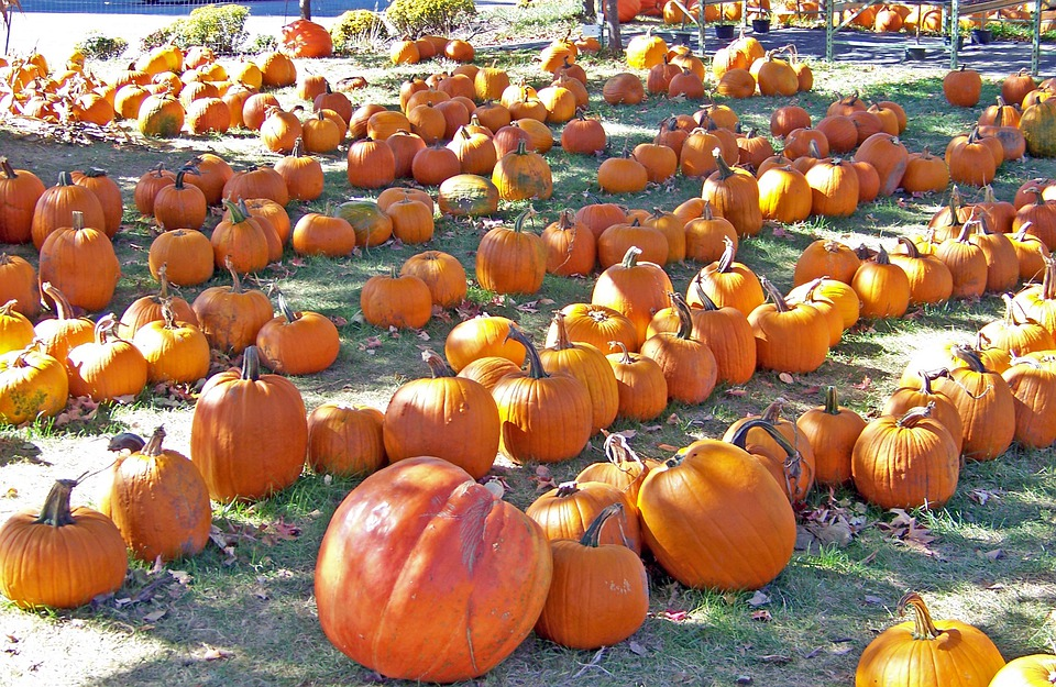 Pumpkins, Vegetable, Orange, Ripe, Harvest, Food