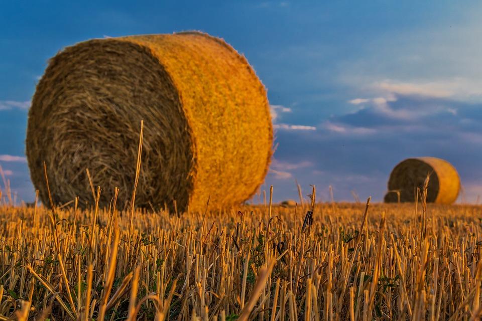 Bale, Straw, Agriculture, Harvest, Rural Landscape