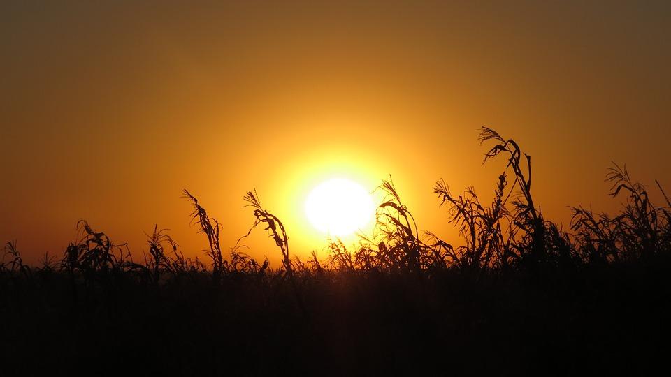 Sol, Corn, Harvest, Landscapes, Crop, Sky