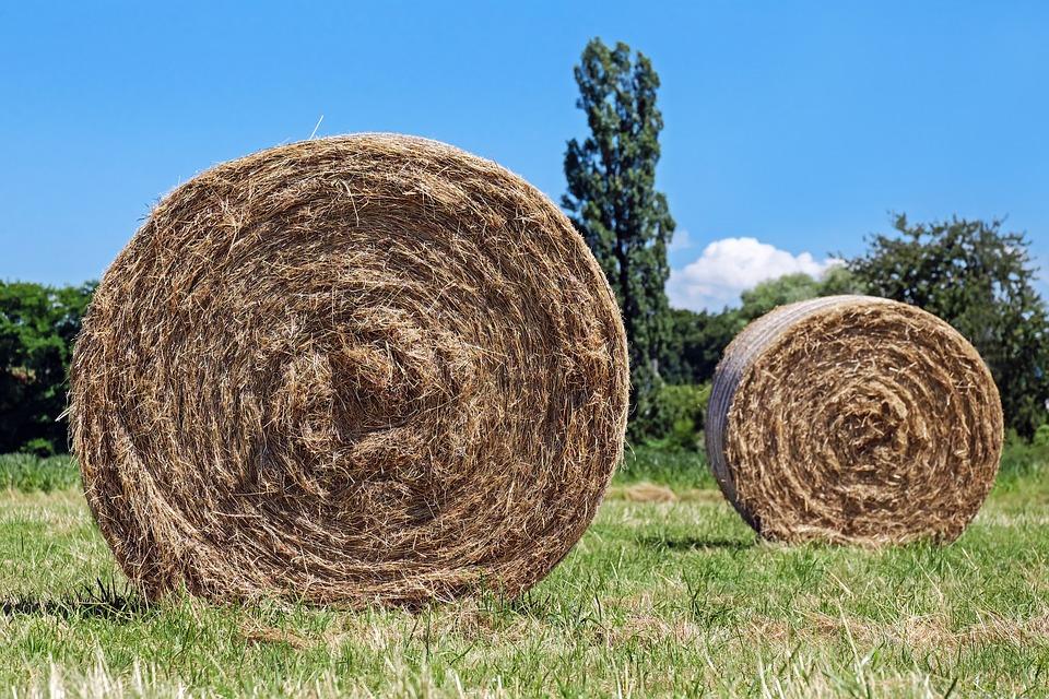 Hay Bales, Field, Hay, Round Bales, Harvest Time