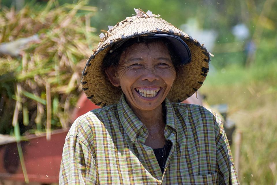 Bali, Indonesia, Travel, Rice Fields, Harvest