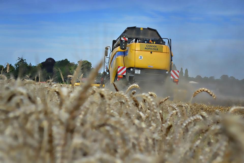Wheat, Harvest, Harvester
