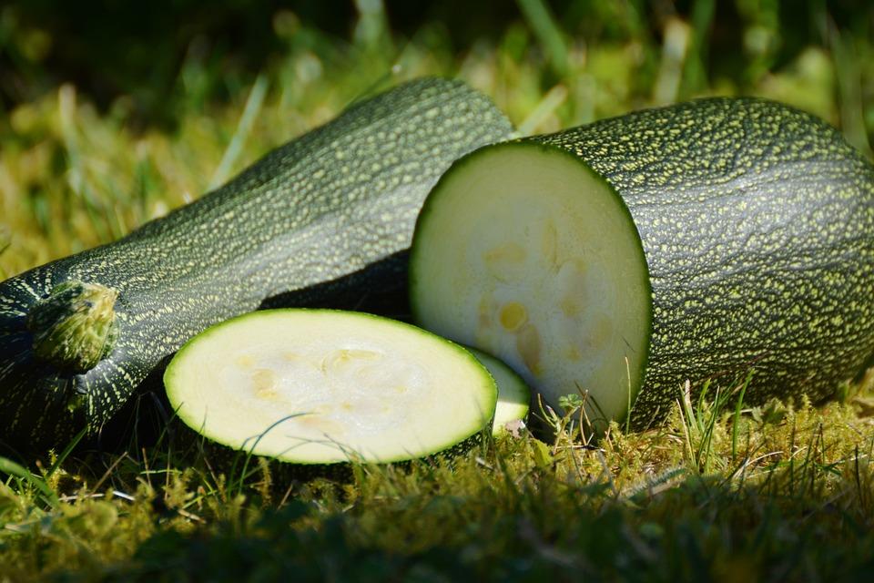 Zucchini, Vegetables, Harvest, Garden, Green, Bio