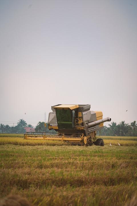 Harvester, Paddy Field, Harvest, Farm, Nature, Paddy