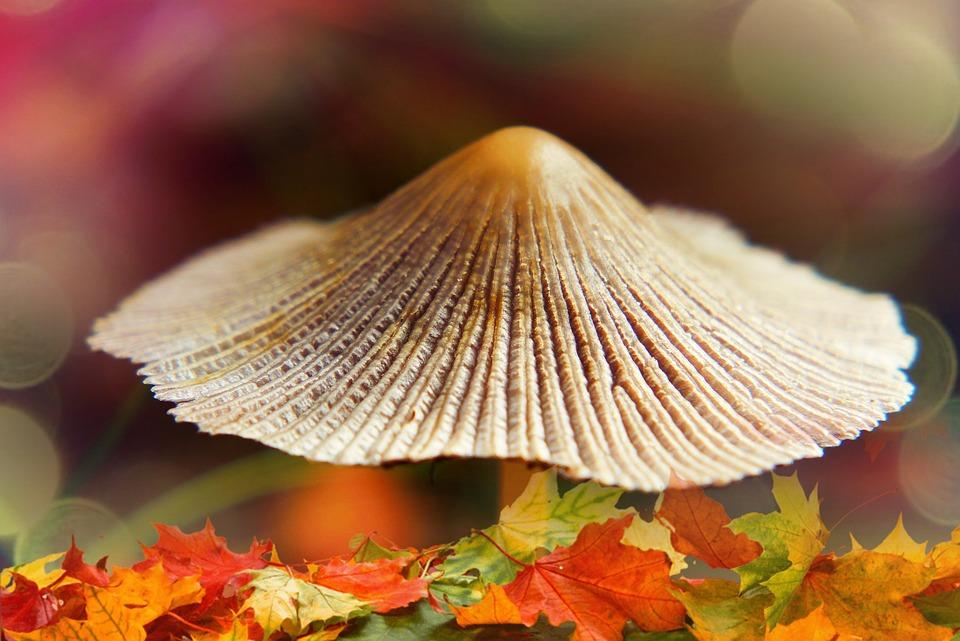 Mushroom, Hat, Seasons Of The Year, Gold, Poland