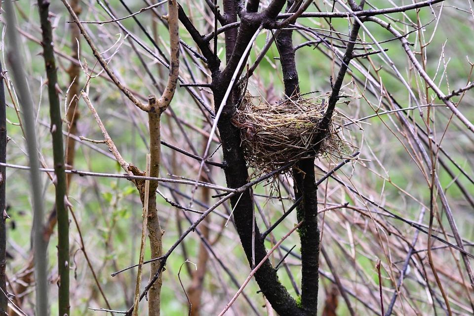 Bird's Nest, Shrubs, Nest, Nature, Spring, Hatch