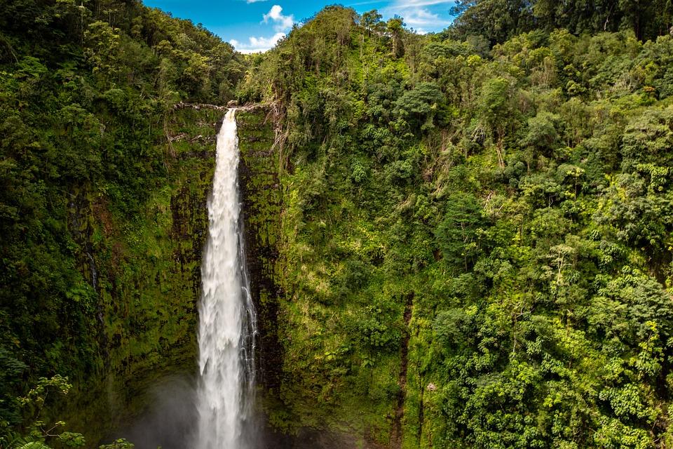 Hawaii, Palm Trees, Foliage, Tropical, Nature, Palm