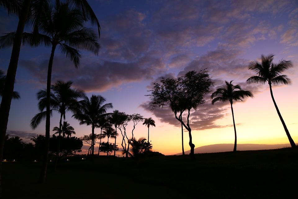 Palm Tree, Sunset, Silhouettes, Hawaii