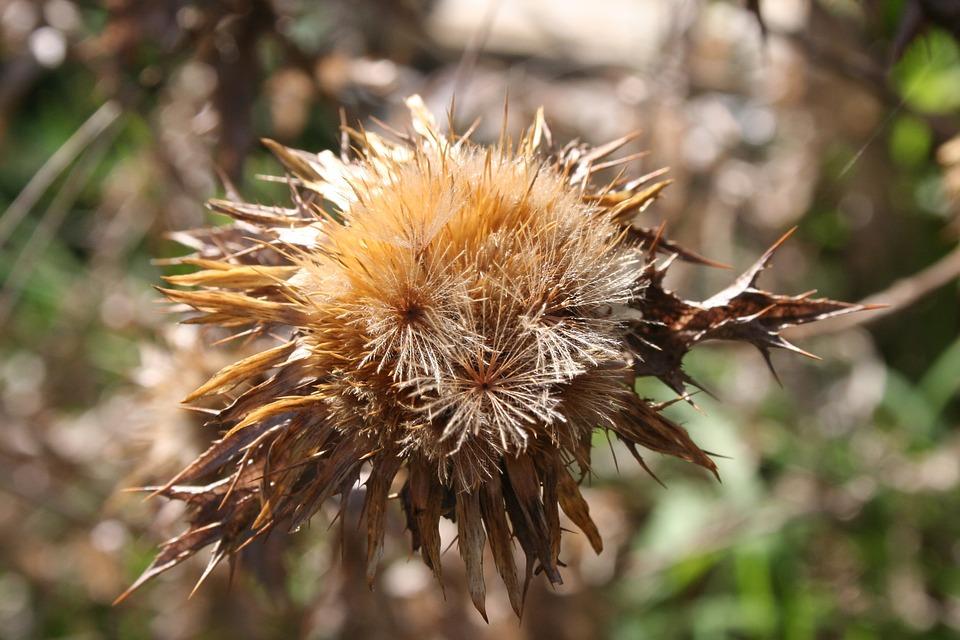 Hawthorn, Nature, Autumn