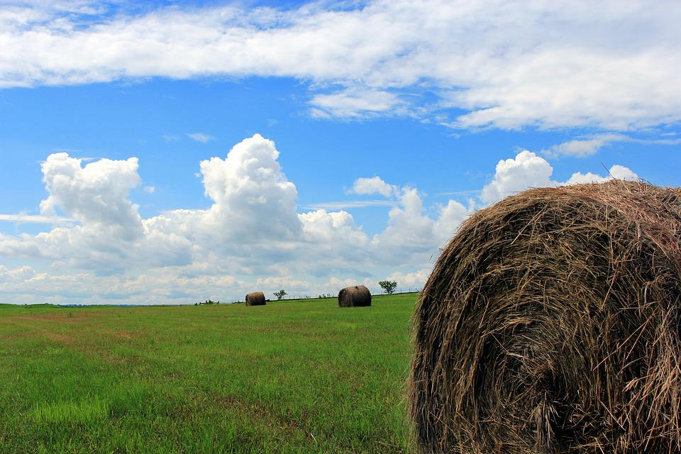 Hay Bale, Hay, Field