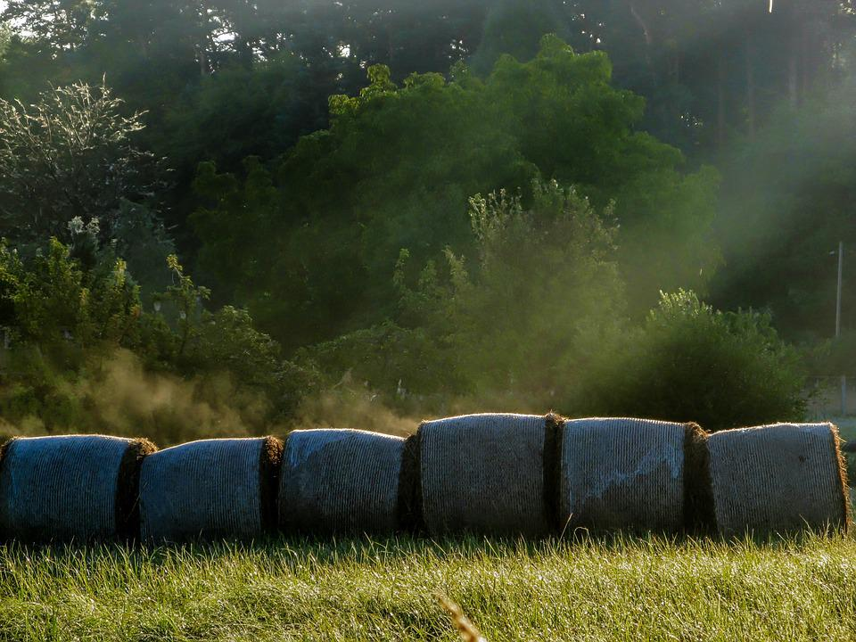 Meadow, Hay Bales, Rolled, Colourless, Fog, Steam, Hay