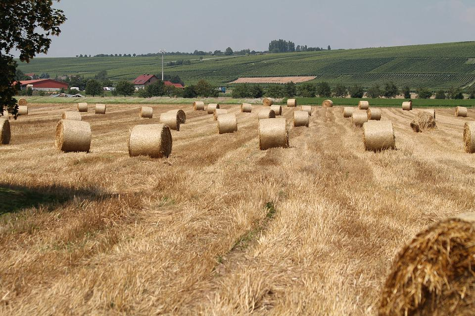 Field, Hay Bales, Arable, Agriculture, Straw