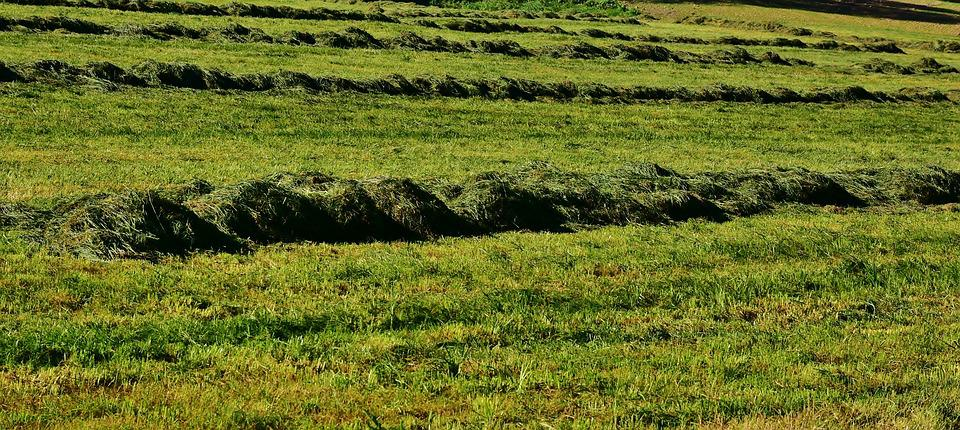Meadow, Grass, Mow, Hay, Nature, Landscape, Green