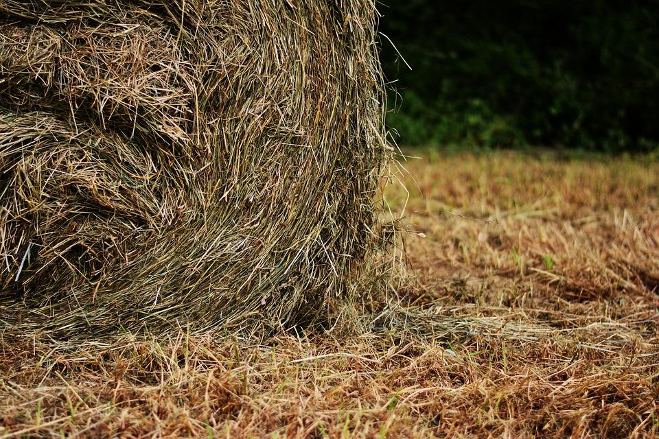 Hay Bales, Hay, Field, Harvest, Meadow, Straw