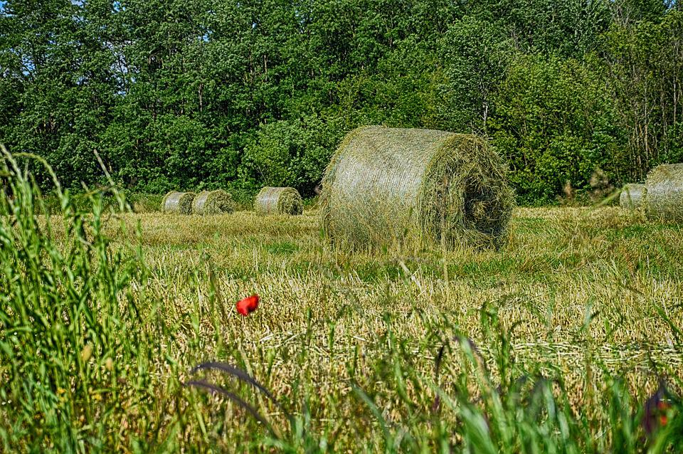 Rotoball, Hay, Countryside, Street, Travell, Green