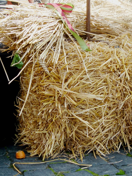 Hay, Autumn, Straw, Straw Bales, Harvest, Agriculture